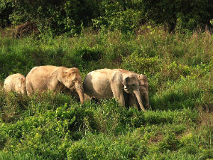 Elephant Valley Mondulkiri