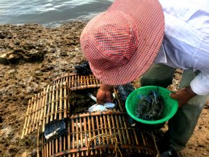 kep krabbenmarkt