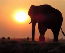 100% olifant