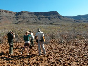 Damaraland Namibie - Rhinotrekking