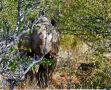 Damaraland Rhinotrekking