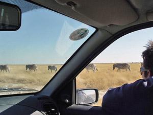 Auto Etosha Namibie safari