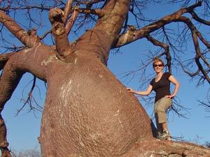 baobab namibie