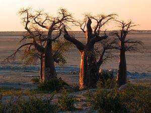 botswana makgadikgadi