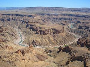 Kokerbomen in de canyon