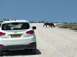 Vakantie in Namibië - auto en neushoorn
