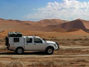 Wildlife desert drive
