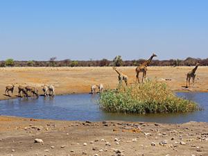 namibie reis etosha safari