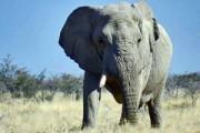 Rondreis 1: Go Namibië