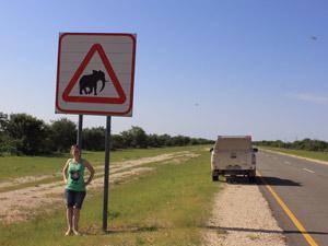 olifanten onderweg namibie