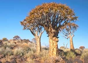 quivvok namibie