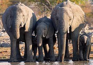 namibie flydrive olifantjes
