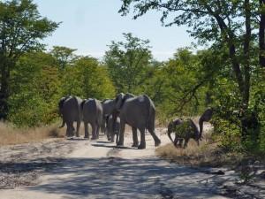 Namibie klimaat Chobe - overstekende olifanten