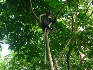 dieren Indonesië