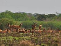 baluran nationaal park java indonesie