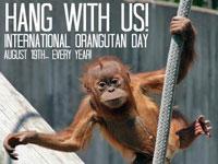 wereld orang oetandag indonesie