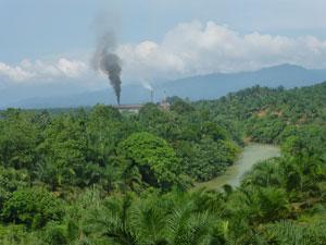 palmolieplantages op sumatra indonesie