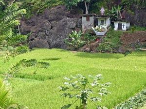 rantepao graven rijstveld indonesie