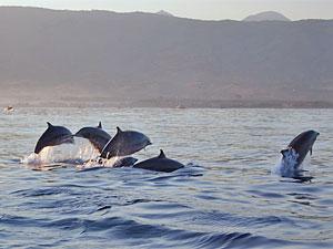 Bali Lovina - Dolfijnen