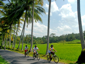 fietsen tussen rijstvelden rondreis indonesie