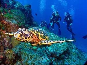 duiken bij gili schildpad indonesie