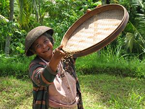 rijstvelden indonesie reizen