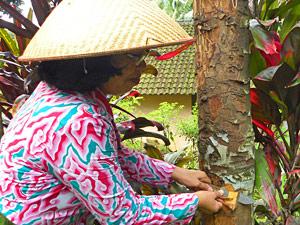 gids tijdens plantation java indonesie