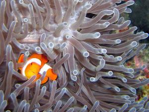 snorkelen bij menjangan eiland indonesie