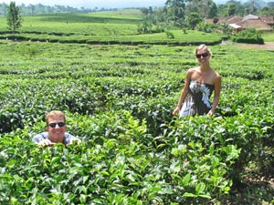 plantage java indonesie
