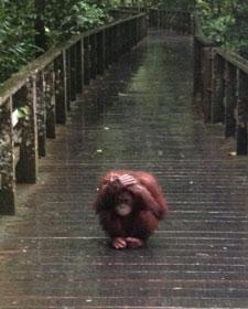 regenseizoen sumatra indonesie
