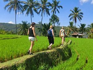 wandelen tussen rijstvelden bali indonesie