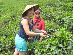 theevelden rondreis bali java indonesie