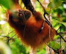 Slapen bij de apen