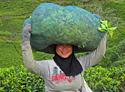 Rondreis 3: Groen, groener, groenst van Java naar Bali
