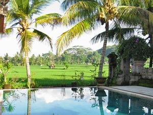Zwemmen met rijstveldview Bali rondreis