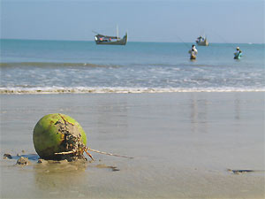 indonesie bali kokos strand