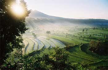 indonesie bali rijstvelden zon