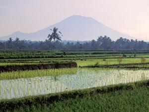 2 weken Bali reis - sidemen vulkaan