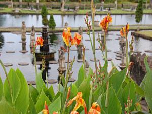 indonesie bali waterpaleis bloemen