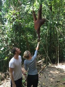 bukitlawang-elske-orangoetan1