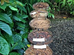 indonesie-online-blog-koffie-ubud
