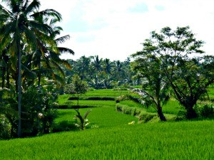 indonesie-online-blog-rijstvelden-ubud
