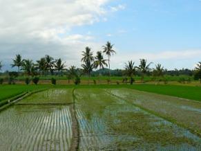 Uitzicht tijdens je treinreis Yogyakarta