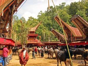 Ervaar het leven van een Toraja in Sulawesi