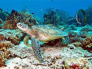 snorkelen-bali-pemuteran