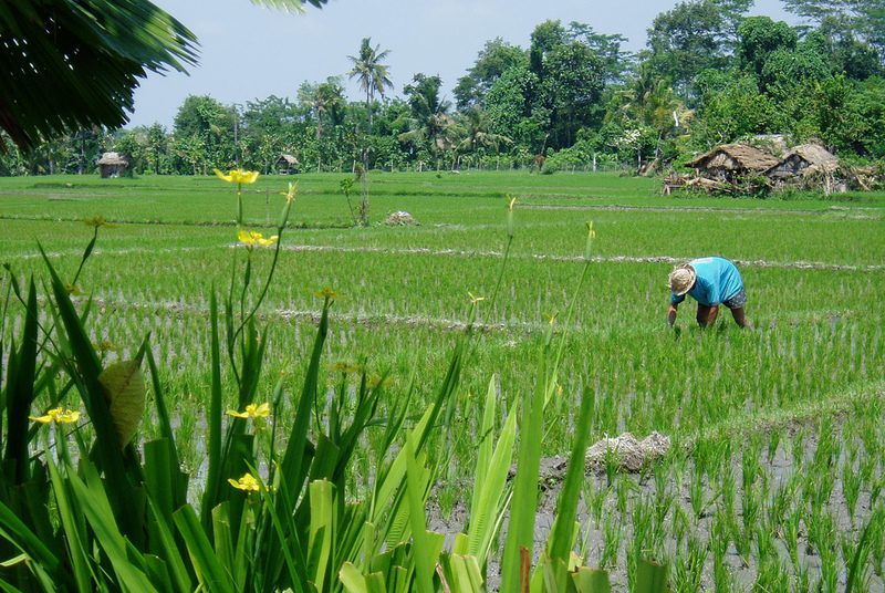 Groen, groener groenst van Java naar Bali
