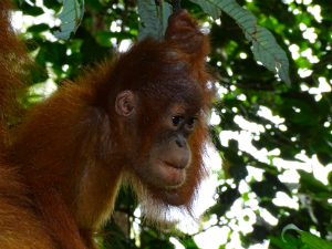 Hoogtepunten Sumatra 1