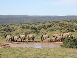 Wasserloch im Addo Elephant Park