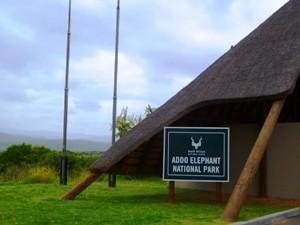 Safari im Addo-Elephant-Park bei Garden Route Gruppenreise