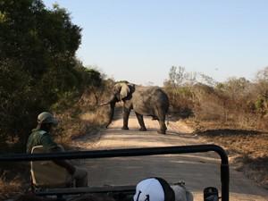 Eine Elefant überquert die Straße im privaten Reservat
